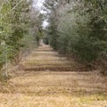 Tree-lined paths make up the outer trail.- White Lake Wetlands Conservation Area Birding + Nature Trail