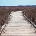The Pintail Boardwalk Trail is a 0.6-mile loop trail.- Cameron Prairie National Wildlife Refuge