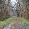 Double track roads take you to the heart of the Atchafalaya River Basin.- Atchafalaya National Wildlife Refuge