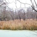 Wetlands in the Atchafalaya River Basin.- Atchafalaya National Wildlife Refuge