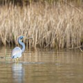 The pond attracts wildlife and is a great place to see some of the species of birds who migrate through or call Grand Isle home, such as this heron.- Grand Isle State Park