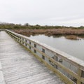 A wooden bridge along the nature trail offers views of wildlife in the pond.- Grand Isle State Park