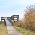 The Wetland Walkway is a 1.5-mile loop boardwalk trail with an observation tower. It is located in Sabine National Wildlife Refuge.- Creole Nature Trail + All-American Road Scenic Byway