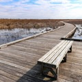 A bench seat along the Pintail Boardwalk Trail inside Cameron Prairie National Wildlife Refuge.- Creole Nature Trail + All-American Road Scenic Byway
