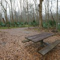 A picnic table in the Pecan Grove area near the Environmental Education Complex at the Barataria Preserve.- Jean Lafitte National Historical Park + Preserve