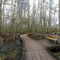 Boardwalk trail through the swamp at the Barataria Preserve. The most accessible trail begins immediately behind the visitor center. - Jean Lafitte National Historical Park + Preserve