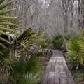 A boardwalk along the Ring Levee Trail near the Pecan Grove section of the Barataria Preserve.- Jean Lafitte National Historical Park + Preserve