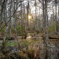 Sunset in the swamp along the Ring Levee Trail.- Ring Levee Trail