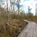 The Visitor Center Trail is a short spur from the Palmetto Trail.- Jean Lafitte Barataria Preserve Wetlands Trails