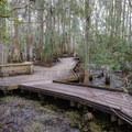 The 1.1 mile Palmetto Trail travels across a boardwalk suitable for strollers and ADA-friendly, passing through a wetlands swamp environment.- Jean Lafitte Barataria Preserve Wetlands Trails