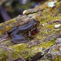 A frog along the Palmetto Trail.- Jean Lafitte Barataria Preserve Wetlands Trails