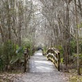 Bridges and long scenic straight sections of the Bayou Coquille Trail.- Jean Lafitte Barataria Preserve Wetlands Trails