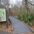 At a parking area, the Bayou Coquielle Trail heads deeper into the bayou. Visitors can park and start this trail, or shuttle cars here from Visitor Center parking area and the beginning of the Palmetto Trail.- Jean Lafitte Barataria Preserve Wetlands Trails