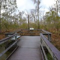 Several viewing platforms are placed as an aside to the primary Bayou Coquille Trail.- Jean Lafitte Barataria Preserve Wetlands Trails