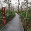 Several different trails from the Visitor Center make up the trails leading to the Lower Kenta Canal.- Jean Lafitte Barataria Preserve Wetlands Trails