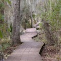 The plank boardwalk that makes up the Marsh Overlook Trail.- Jean Lafitte Barataria Preserve Wetlands Trails