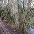 The Marsh Overlook Trail.- Jean Lafitte Barataria Preserve Wetlands Trails