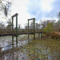 A bridge along the Marsh Overlook Trail.- Jean Lafitte Barataria Preserve Wetlands Trails