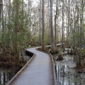 The plank walkway of the Marsh Overlook Trail.- Jean Lafitte Barataria Preserve Wetlands Trails