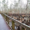 The plank walkway from Camping Area 1 to the amphitheater.- Sam Houston Jones State Park