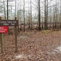 The trailhead for the Cypress Tupelo Trail hike.- Sam Houston Jones State Park