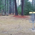 The park is home to the 18-hole Bob Rodgers Memorial Disc Golf Course. - Sam Houston Jones State Park