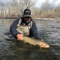 A Big Wood River rainbow trout.- Winter Fly Fishing with Silver Creek Outfitters
