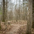 One of the many benches that are placed throughout the trail. - Chicot State Park Hiking Trail