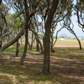 Shady grove and grassy field near the pedestrian beach.- Fort Fisher State Recreation Area