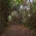 The Basin Trail leads through maritime forest and salt marsh.- Fort Fisher State Recreation Area