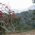 There is an amazing variety of flowers along this hike.- Cerro Kennedy (La Cuchillo de San Lorenzo) Sunrise Hike
