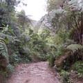 Dense jungle surrounds the path.- Cerro Kennedy (La Cuchillo de San Lorenzo) Sunrise Hike