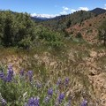 Lupine along the trail in Spring.- East Fork Carson River Hot Springs