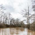 Early spring on Bayou Bartholomew.- Chemin-a-Haut Creek