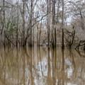 Flooded banks of Bayou Bartholomew.- Chemin-a-Haut Creek