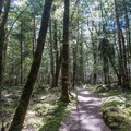 The path leads through the rainforest for the final stretch.- New Zealand Great Walks: Kepler Track