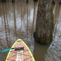 Paddling into a calm lagoon.- Bayou Dorcheat