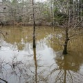 Dorcheat is known for good fishing spots.- Bayou Dorcheat
