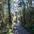 Lush rainforest to start the track.- New Zealand Great Walks: Milford Track
