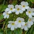 Wildflowers along the Milford Track.- New Zealand Great Walks: Milford Track