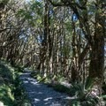 Climbing back to Key Summit turnoff.- New Zealand Great Walks: Routeburn Track