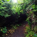 The trail to Fishing Rock is encroached on by thick coastal foliage.- Fishing Rock State Recreation Site