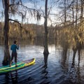 A stand-up paddle boarder enjoying the Lake Chicot water trail. - Lake Chicot Water Trail