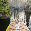 The scenery found on Lake Chicot is truly special.- Lake Chicot Water Trail
