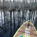 Beautiful reflections from the cypress and water tupelo trees. - Lake Chicot Water Trail