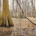 Cypress trees and vines growing out of the swampy Chicot Lake. - Chicot State Park Campground + Cabins