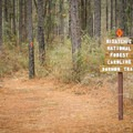 The trail on the northeast end starts out wide but quickly turns to a singletrack trail. - Caroline Dormon Trail