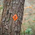 The trail is blazed orange and really well marked. - Caroline Dormon Trail