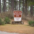 The Longleaf Vista is worth the stop! - Longleaf Scenic Byway
