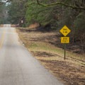 Keep your eyes on the road! There are several ATV trail crossings over the byway. - Longleaf Scenic Byway